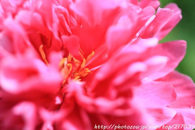 IMG_8621石楠花