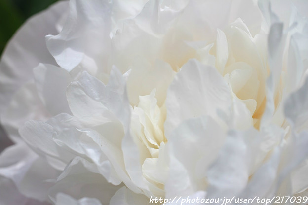 IMG_8626石楠花