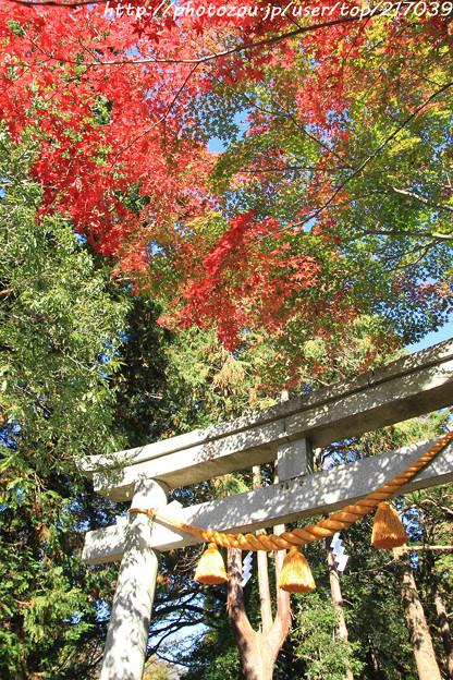 IMG_8717興志漏神社・鳥居といろは紅葉