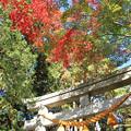 写真: IMG_8717興志漏神社・鳥居といろは紅葉