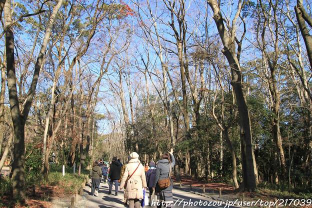 IMG_8745糺の森(表参道)