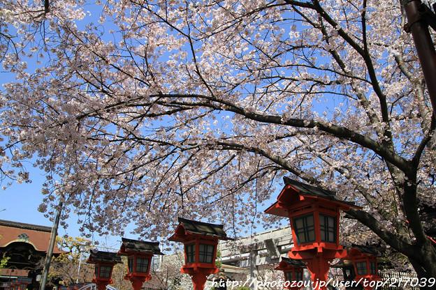 IMG_8775六孫王神社・染井吉野と灯籠