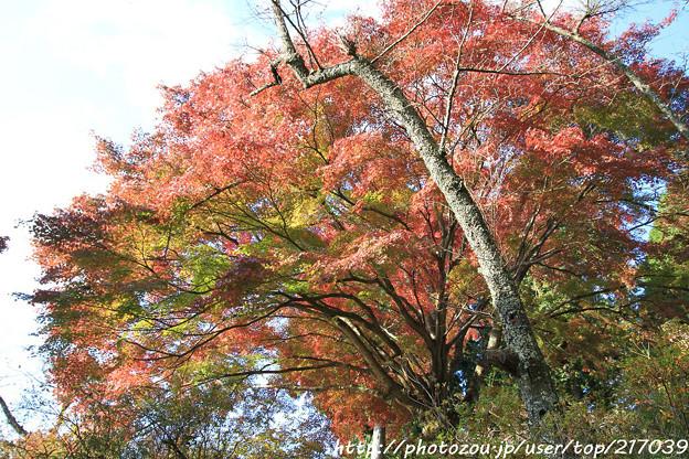 IMG_9080鳥見山公園・紅葉