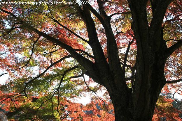 IMG_9081鳥見山公園・紅葉