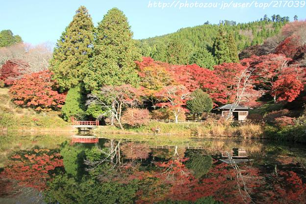 IMG_9083鳥見山公園・勾玉池