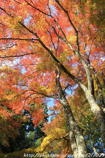 IMG_9087鳥見山公園・紅葉