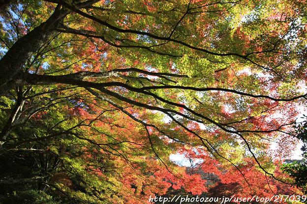 IMG_9088鳥見山公園・紅葉