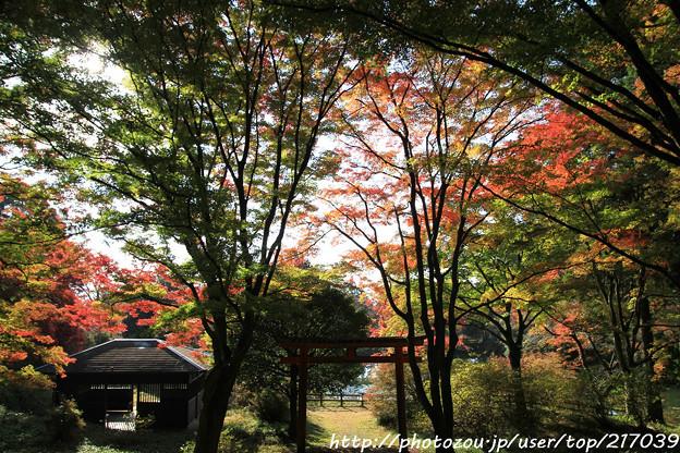 IMG_9093鳥見山公園・鳥見神社