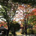 Photos: IMG_9093鳥見山公園・鳥見神社