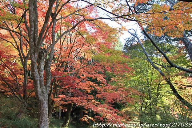 IMG_9094鳥見山公園・紅葉