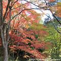 Photos: IMG_9094鳥見山公園・紅葉