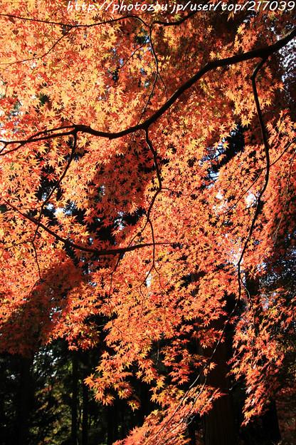 IMG_9095鳥見山公園・紅葉