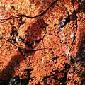 Photos: IMG_9095鳥見山公園・紅葉