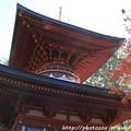 Photos: IMG_9104圓成寺・多宝塔