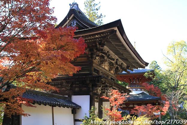 IMG_9119圓成寺・楼門(重要文化財)と多宝塔