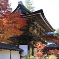 Photos: IMG_9119圓成寺・楼門(重要文化財)と多宝塔