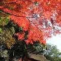 IMG_9120圓成寺・紅葉と春日堂(国宝)&白山堂(国宝)