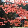 Photos: IMG_9122圓成寺・紅葉