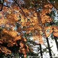 Photos: IMG_9124圓成寺・紅葉