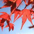 Photos: IMG_9125圓成寺・紅葉