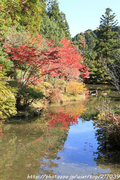 IMG_9126圓成寺・庭園