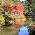 Photos: IMG_9126圓成寺・庭園