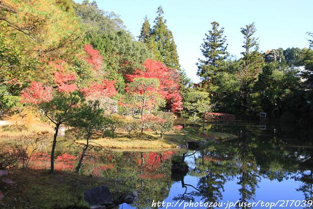 IMG_9128圓成寺・庭園
