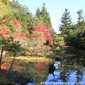 Photos: IMG_9128圓成寺・庭園