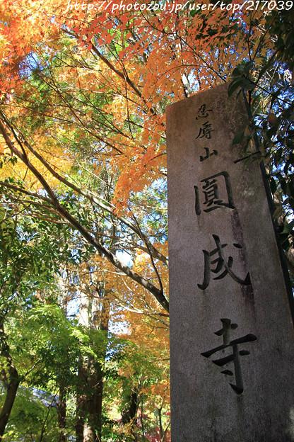 IMG_9129圓成寺・紅葉