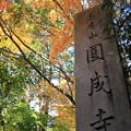 Photos: IMG_9129圓成寺・紅葉