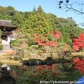 Photos: IMG_9130圓成寺・庭園