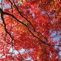 Photos: IMG_9134圓成寺・紅葉