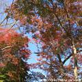 Photos: IMG_9135正暦寺・紅葉