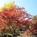 Photos: IMG_9140正暦寺・紅葉