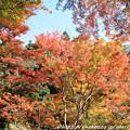 Photos: IMG_9147正暦寺・紅葉