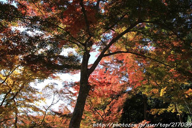Photos: IMG_9148正暦寺・紅葉