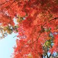 Photos: IMG_9149正暦寺・紅葉