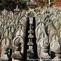 Photos: IMG_9152正暦寺・僧侶の墓石群