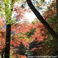Photos: IMG_9153正暦寺・紅葉