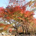 Photos: IMG_9199紅葉