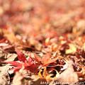 Photos: IMG_9200紅葉