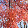 IMG_9201紅葉