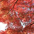 IMG_9206紅葉
