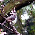 写真: 鳥語花香
