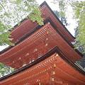 写真: 浄瑠璃寺