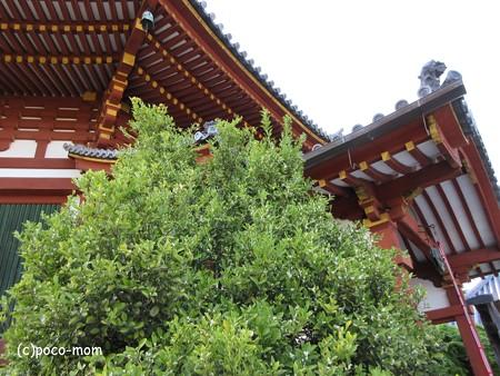 興福寺 IMG_0542