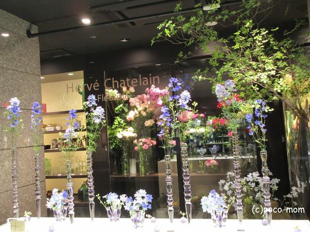渋谷bunkamura フラワーショップ エルベシャトランのウィンドウ IMG_0845