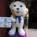 写真: 奈良 雪丸 IMG_1344