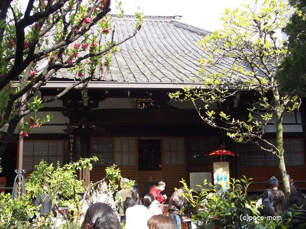 写真: 瑞泉寺花まつり P4081080