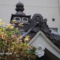 写真: 瑞泉寺花まつり P4081081